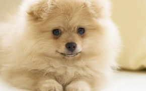 Picture puppy, dog, cute, pup. doggie