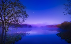 Picture forest, summer, fog, river, dawn, morning