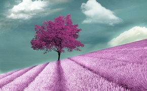 Picture field, style, tree