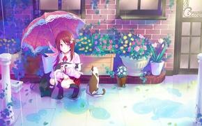 Picture cats, house, rain, Windows, plants, umbrella, the door, puddles, red, schoolgirl, flowers, sitting, pots, brick