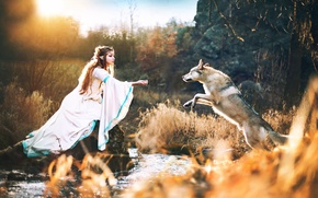 Picture wolf, elf, Wolf with elves princess