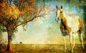 Picture landscape, canvas, photo, tree, horse, horse, texture, horizon