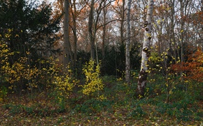Picture autumn, forest, grass, leaves, trees, Park, Netherlands, the bushes, Beeckestijn
