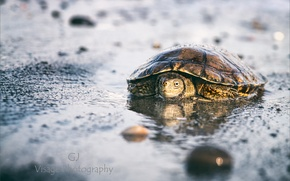 Picture beach, macro, turtle, GJ-Vernon