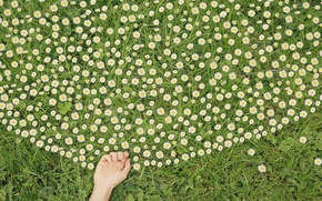 Picture flowers, hand, chamomile