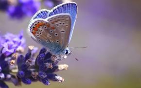 Wallpaper blur, butterfly, blue, flower, macro