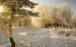 Picture cold, frost, snow, trees, landscape, Winter, the snow, sunshine, Winter, path, snow, rime, frost