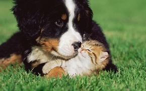 Picture grass, kitty, dog, friendship