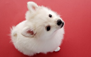 Picture dog, baby, puppy, white