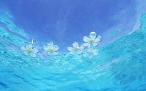 Picture wave, drops, flowers, art, waves, art, flowers, drops, plumeria, frangipani, plumeria, frangipani, water and sky, …