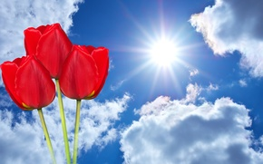 Wallpaper clouds, the sky, the sun, photoshop, three, tulips, red, background, rays, flowers