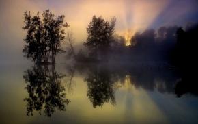 Picture trees, fog, lake, reflection, sunrise, morning