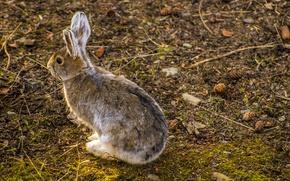 Picture forest, rabbit, bumps