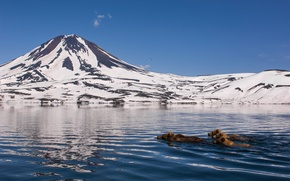 Picture water, snow, mountains, nature, swim, bears, Kamchatka