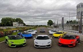 Picture track, Lamborghini, white, red, green, blue, roadster, Aventador, Huracan, Goodwood Motor Circuit