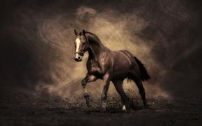 Wallpaper horse, stallion, Mustang
