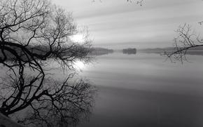 Picture trees, lake, dawn, black and white, Monochrome