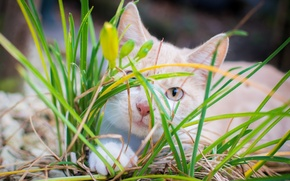 Picture cat, grass, kitty