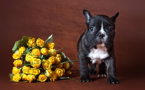 Picture flowers, background, dog