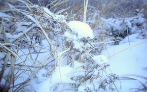 Picture grass, snow, Winter
