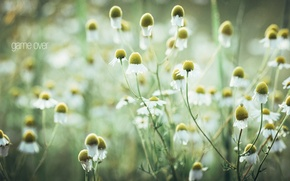 Picture macro, chamomile, photographer, photography, photographer, macro, Björn Wunderlich
