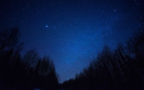 Picture space, stars, trees, night, space, silhouette, the milky way