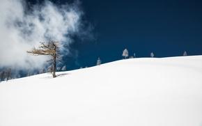 Picture snow, tree, mountain