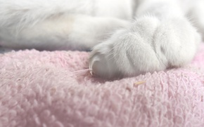 Picture cat, gentle, fluffy, foot, soft