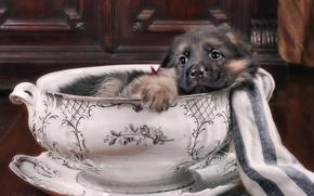 Picture cute, puppy, German shepherd, tureen