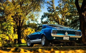 Picture Mustang, Ford, Fall, Beautiful, Classic, Blue, Colorful, Fastback, Automotive, American Muscle, Rear, GT390