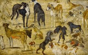 Wallpaper animals, picture, Jan Brueghel the elder, Sketches Of Dogs