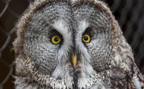 Picture eyes, look, fear, animal, owl, bird, feathers, beak, owl