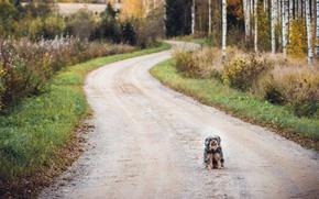 Wallpaper road, each, dog
