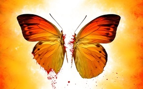 Wallpaper blood, yellow, butterfly