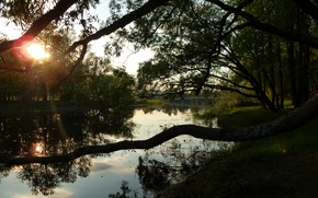 Picture river, shore, the evening
