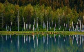Picture Alaska, USA, Chugach National Forest, Portage Lake