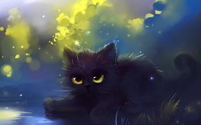 Picture cat, grass, cat, figure, fluffy, Kote, apofiss