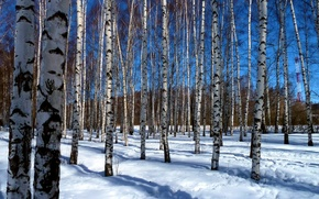 Picture the sky, the sun, light, snow, trees, branches, nature, blue, paint, beauty, spring, shadows, birch, …