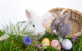 Picture eggs, happy easter, easter, Easter eggs, Easter