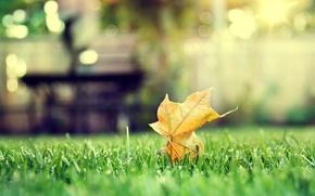 Picture autumn, grass, sheet, maple