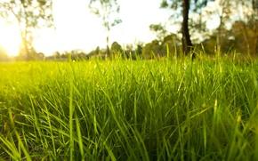 Wallpaper grass, color, macro, nature, droplets, Rosa, grass, Nature, macro, dense, bright, fresh garden, rime, rural ...