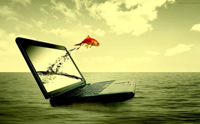 Picture sea, water, fish, laptop