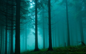 Picture forest, nature, haze