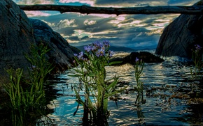 Picture water, flowers, Norway, log, Norway, the fjord