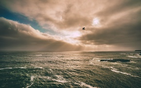 Picture The sun, Clouds, The ocean, Reflection, Sea, Lake, Seagull, Clouds, Rays, Albatross, Foam, Reefs