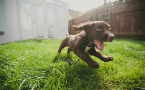 Picture joy, dog, running, puppy, weed
