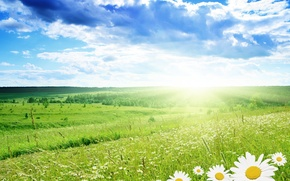 Picture field, summer, clouds, chamomile, spring, 154