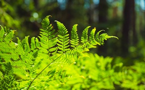Picture greens, forest, grass, macro, nature, fern, the bushes