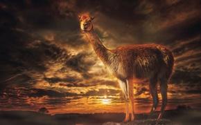 Picture treatment, Lama, View Llama