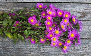 Picture autumn, bouquet, asters